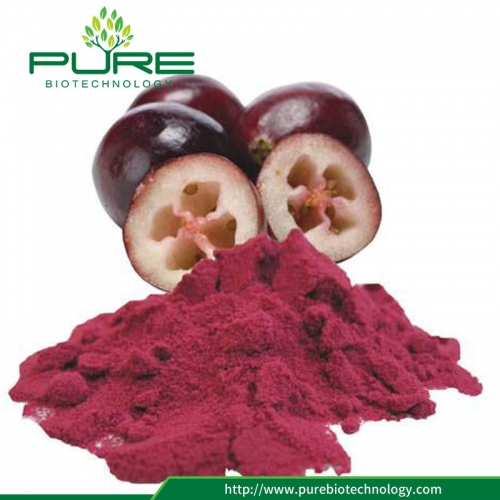 Cranberry Fruit Extract / 1% -40% Proanthocyanidine